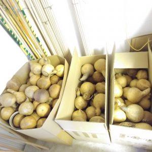 high quality raw material cabaca replacement for berimbau instrument from berimbau shop